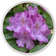 Flowering Pink Rhododendron Blossoms On A Bush Round Beach Towel