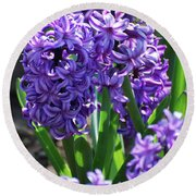Flowering Purple Hyacinthus Flower Bulb Blooming Round Beach Towel