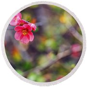 Flowering Quince In Spring Round Beach Towel