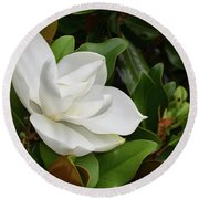 Flowering White Magnolia Blossom On A Magnolia Tree Round Beach Towel