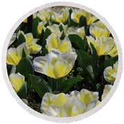 Flowering Yellow And White Tulips In A Spring Garden  Round Beach Towel