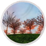 Flowering Young Cherry Trees On A Green Hill In The Park  Round Beach Towel