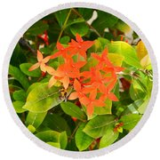 Flowers And Foliage Round Beach Towel