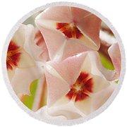 Flowers-hoya 1 Round Beach Towel
