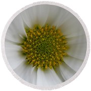 Core Of A Daisy Round Beach Towel