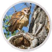 Fluffed Up Barn Owl Owlet Round Beach Towel