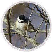 Fluffy Chickadee Round Beach Towel