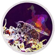 Fly Housefly Insect Close Macro  Round Beach Towel