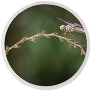Fly Little Dragonfly Round Beach Towel