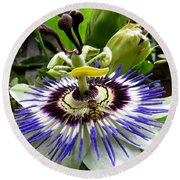 Fly On A Passion Flower Round Beach Towel