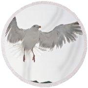 Flying European Herring Gull Round Beach Towel