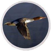 Flying Female Merganser - Odell Lake Oregon Round Beach Towel
