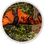 Flying Foxes Round Beach Towel