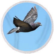 Flying Pigeon . 7d8640 Round Beach Towel