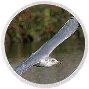 Flying Sea Gull - Eugene Oregon Round Beach Towel