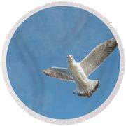 Flying Seagull Round Beach Towel by Pradeep Raja PRINTS