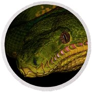 Focus - A Close Look At An Emerald Boa Constrictor Round Beach Towel