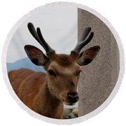 Focus Deer Round Beach Towel
