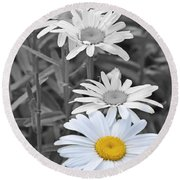For The Love Of Daisy Round Beach Towel
