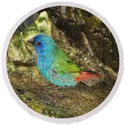 Forbes Parrot Finch Round Beach Towel