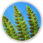 Forest Ferns Art Prints Blue Sky Botanical Baslee Troutman Round Beach Towel
