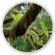 Forest Ferns Art Prints Fern Giclee Prints Baslee Troutman Round Beach Towel