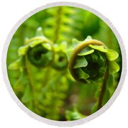 Forest Ferns Fine Art Photography Art Prints Baslee Troutman Round Beach Towel