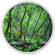 Forest In Hdr Round Beach Towel