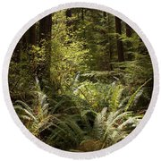 Forest Sunlight And Shadows  Round Beach Towel