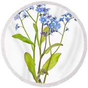 Forget-me-not Flowers On White Round Beach Towel by Elena Elisseeva
