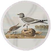 Fork-tailed Gull Round Beach Towel