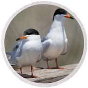 Forster's Terns Round Beach Towel