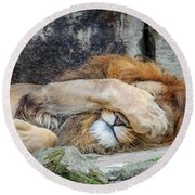 Fort Worth Zoo Sleepy Lion Round Beach Towel by Robert Bellomy