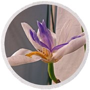Fortnight Lily Round Beach Towel