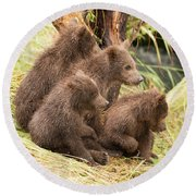 Four Bear Cubs Looking In Same Direction Round Beach Towel