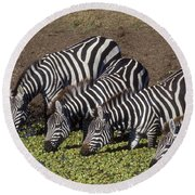 Four For Lunch - Zebras Round Beach Towel