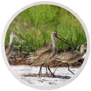 Four Marbled Godwits Round Beach Towel