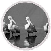 Four White Pelicans In A Funny Pose Round Beach Towel
