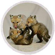 Fox Cubs At Play II Round Beach Towel