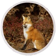 Fox In The Fall Round Beach Towel