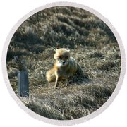 Fox In The Wind Round Beach Towel