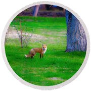 Fox Of Boulder County Round Beach Towel