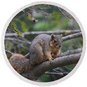 Fox Squirrel On A Branch  Round Beach Towel