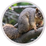 Fox Squirrel On A Branch - Southern Indiana Round Beach Towel