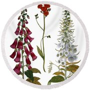 Foxglove And Hawkweed Round Beach Towel