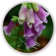 Foxgloves In The Rain Round Beach Towel