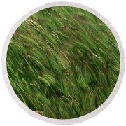 Foxtail Barley - Salisbury Potrero Round Beach Towel