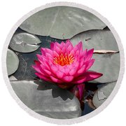 Fragrant Water Lily Round Beach Towel