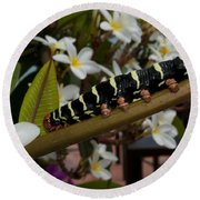 Frangipani Tree And Caterpillar Round Beach Towel