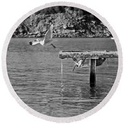 Freedom Is A Seagull Name Black And White Round Beach Towel